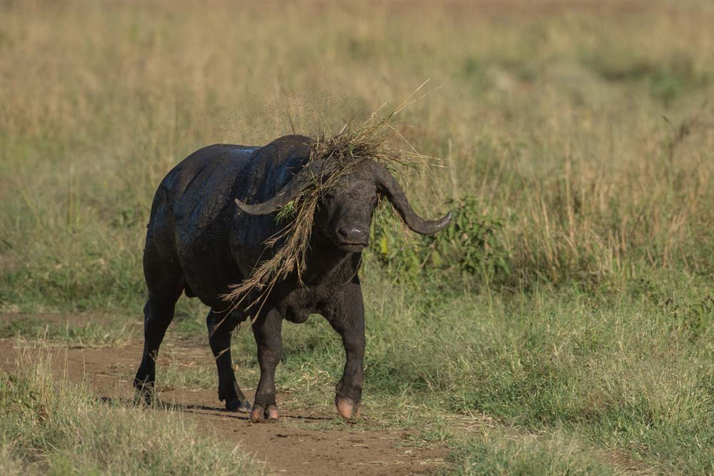 Buffalo Hat made of grass