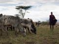 Jie cattle pastoralist